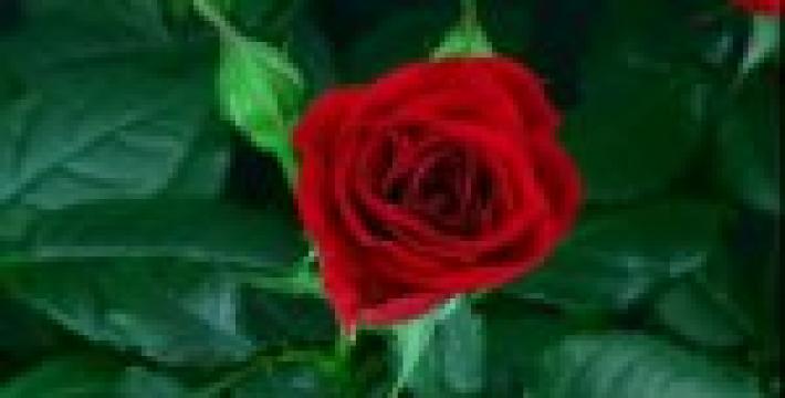 С весенним настроением и романтическими чувствами к милым дамам! Видео