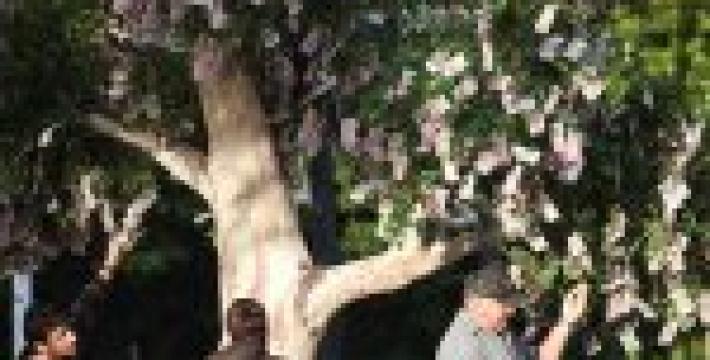 В Австралии деньги растут на деревьях