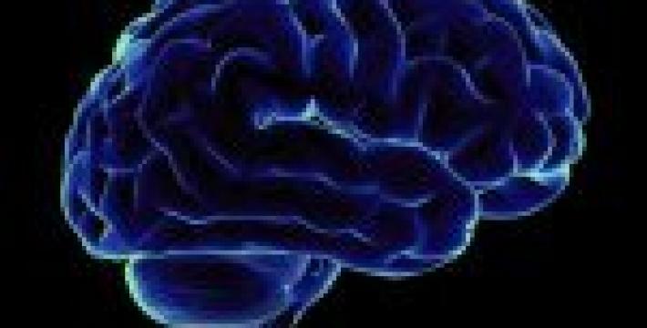 Биологи вырастили мозг в пробирке