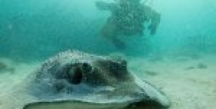 В Доминикане открывается подводный музей