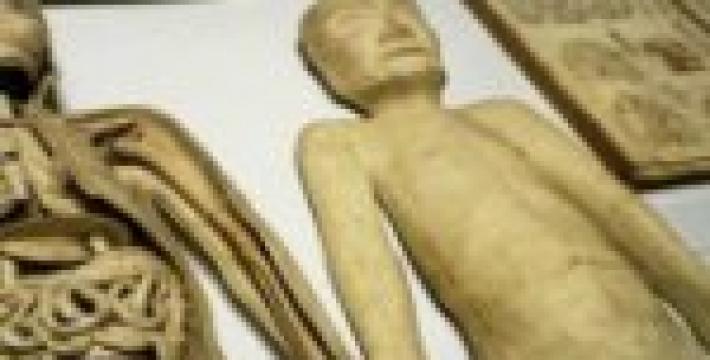 Выставка в токийском музее познакомит с искусством аутопсии