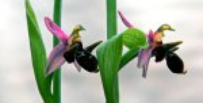 В Москве ФНКА АзерРос организует выставку «Хары бюльбюль – цветок мира и любви»