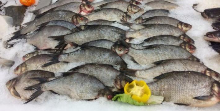 Русская рыба – живая и охлажденная – появится на 34 рынках Москвы