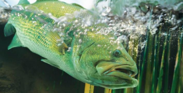 В центре Москвы появится двухметровый аквариум с редкими рыбами