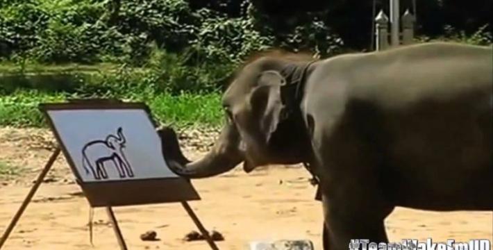 Слон, рисующий профессионально. Видео