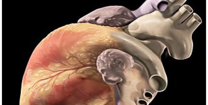 Ученым удалось разработать материал для создания искусственного сердца