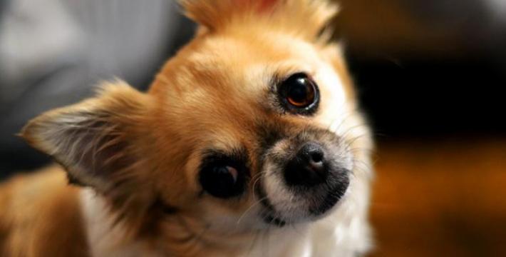 Скандал с собаками объединил политических оппонентов