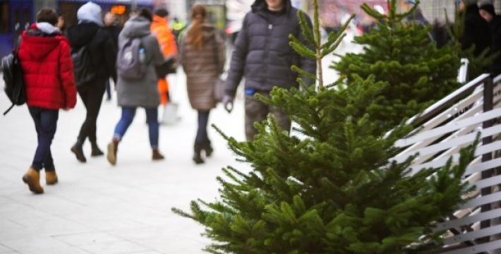Петр Бирюков: Сдать новогодние елки на утилизацию в этом году можно будет в 473 пунктах до 1 марта
