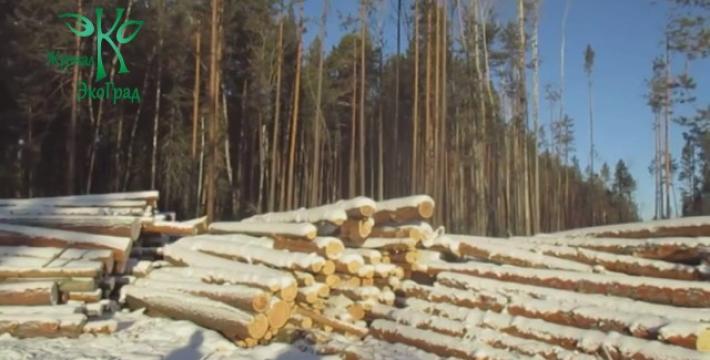 Миллениалы и экологи Прибайкалья выступили с инициативой строжайшего запрета рубок сибирского кедра