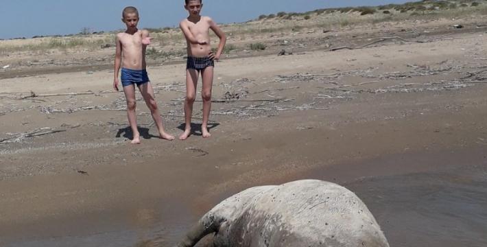 Пляжный сезон в Махачкале