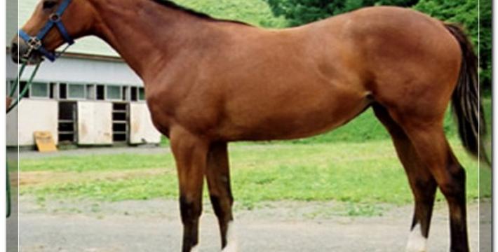 На конной выставке России впервые за 100 лет будет представлена Карабахская порода