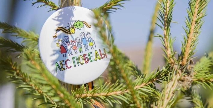 Акция «Лес Победы» проходит по всей России с соблюдением мер безопасности