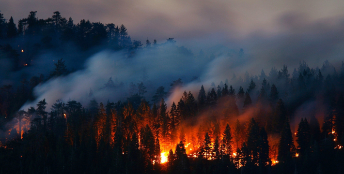 Закрытое заседание Общественного совета Рослесхоза. Лесные пожары. Тушить нельзя гореть
